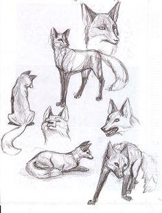 fox animal study