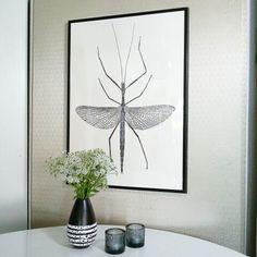 Insektenbild