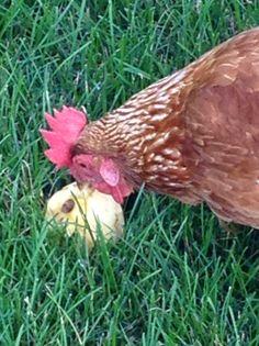 Fluttershy finds a yummy apple
