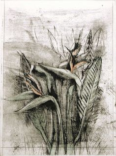 Strelitzia, from Temple of Flora, 1978, etching, drypoint, photogravure with watercolor