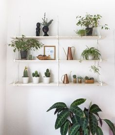 Decorating ideas for plant shelves in living room new, plant shelves Ideas Mancave, Plantas Indoor, Best Indoor Plants, Deco Design, Design 24, Design Trends, Design Ideas, Green Plants, Big Plants