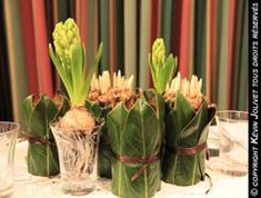 Autres idées Plants, Gardens, Spring Bulbs, Fall, Plant, Planting, Planets