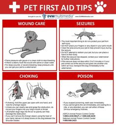 Pets First Aid Tips. These are some things that you can do to help your pet in case of choking, poisoning, seizures or injuries... Because your pet is part of your family and it is your duty to keep i