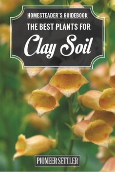 What Is Clay Soil And What Plants Does Well With This Heavy Soil? | Homesteader's Guide To Gardening by Pioneer Settler at http://pioneersettler.com/plants-for-clay-soil/