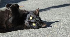 My beautiful black cat Kairi. :-)