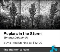 The Poplars in the Storm