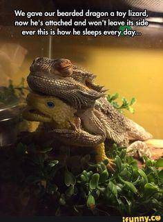 bearded, dragon, toy, lizard, cute