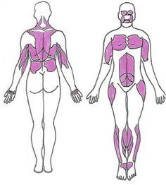 Research progress in FSHD Muscular Dystrophy Symptoms, Myotonic Dystrophy, Muscle Diseases, Muscle Disorders, Muscular Dystrophies, Ehlers Danlos Syndrome, Infancy, Teenage Years, Chronic Pain