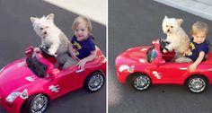 Cão Conduz Carro e Leva Dono a Passear
