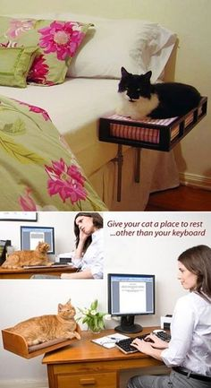 Can a cat to sleep there? :)