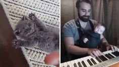 Cutest cat ever, the sweetest lullaby and more - vote for your favorite video