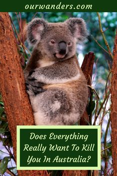 Does Everything Really Want To Kill You In Australia