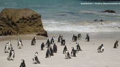 Africa Travel, Nature Pictures, Bouldering, South Africa, Tourism, Wildlife, San, Country, Beach