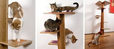 More about Baobab Cat Tree #catfurniture - See more cat furniture at Catsincare.com