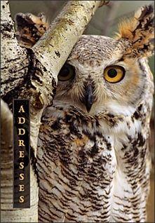 Great Horned Owl Pocket Address Book.