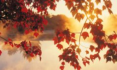 5 Ways to Mindfully Prepare for Fall