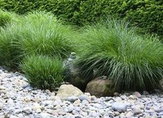 Hardscaping and low maintenance grasses are a great and easy combo in the garden