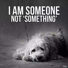 Until dogs are more than property,  like a couch, they will be treated as throwaways!!  Laws need to change!!!