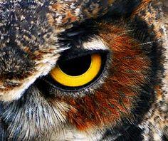 Résultats de recherche d'images pour «owl eye»