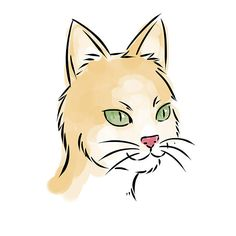 How to Draw a Cat Face: 8 Steps (with Pictures) - wikiHow