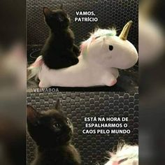 kkk q fofo Funny Animal Memes, Funny Animals, Cute Animals, Funny Memes, Otaku Meme, Memes Status, Best Memes, Funny Posts, Funny Pictures