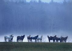Horses in Fog Photo by Keith Szafranski -- National Geographic Your Shot