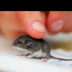 Baby mouse ! I know you won't buy this for me but I am still putting it on my list