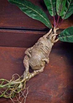 Inspirations, good addresses and DIY creations tutorials to arrange a Harry Potter-themed get together, birthday or wedding ceremony Harry Potter Halloween, Theme Harry Potter, Harry Potter Birthday, Harry Potter Diy, Harry Potter World, Harry Potter Tumblr, Harry Potter Mandrake, Mandrake Root, Funny Vegetables