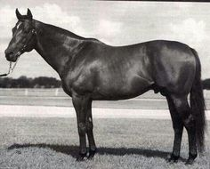 In Reality: royal Chef de Race, he ran against the toughest competitors, including Dr. Fager, still winning a long list of major races, earning over $795k & finishing 2nd in the 1967 Preakness. A sire of sires, he ranked 4 times in the top 10 & was a Champion Juvenile Sire from KY's Gainesway Farm, where he was buried in 1989. He sired Valid Appeal in Echo's damline among 83 stakes winners.