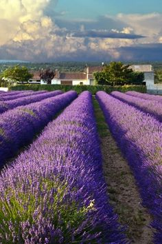 LAVENDER FIELDS IN PROVENCE, FRANCE  A summer in the South of France deserves a place on everyone's bucket list for countless reasons. But reason #1: To witness the picturesque, Provençal villages come alive with endless fields of purple, fragrant lavender.