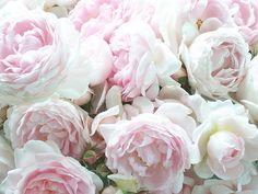 Peonies - my favorite flowers