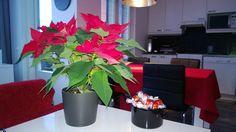 Joulua valmistellen... Plants, Plant, Planets