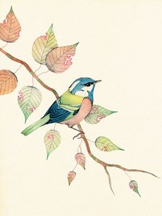 Wildlife in Inks & Watercolours by Colleen Parker : Saturday morning watercolour. Pinned by y Lezama Art Art And Illustration, Watercolor Illustration, Illustrations, Watercolor Bird, Watercolor Paintings, Watercolours, Fabric Painting, Painting & Drawing, Bird Drawings