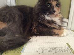 My catz doing my home work