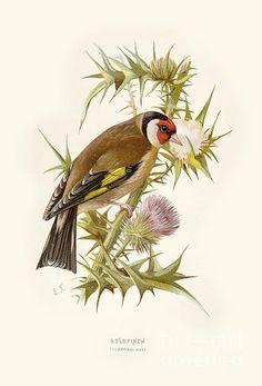 Goldfinch Restored by Pablo Avanzini Framed Prints, Canvas Prints, Goldfinch, Urban Landscape, Wild Birds, Restoration, Tapestry, Artwork, Poster