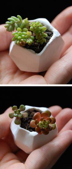 DIY Tiny Planters