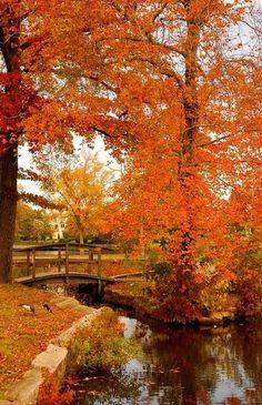 Over the bridge to Autumn Color.