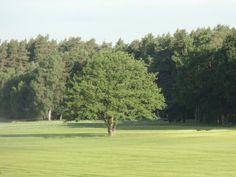 Markanter Baum in der Nähe des Noris Stein