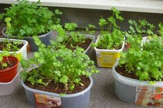 Make your own salad and herb mix on stock - no more bag dressing - Finished salad-herb mixes from the supermarket usually contain many additives and few herbs. Fresh Herbs, Chutney, Finger Foods, Great Recipes, Curry, Clean Eating, Brunch, Frozen, Food And Drink