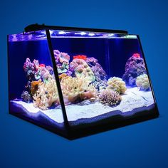 Get a better view of your fish corals and inverts in Lifegard Aquatics Full View Aquariumsnow available for pre-order @ MD! Home Aquarium, Reef Aquarium, Saltwater Tank, Saltwater Aquarium, Fish Aquarium Decorations, Tanked Aquariums, Fish Aquariums, Amazing Aquariums, Marine Tank