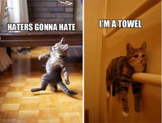 17 Funny Cat Memes That Will Make You Laugh Out Loud