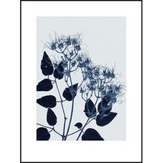 CLEMENTIS BLUE - 30x40 Clematis, Graphic Artwork, New Homes, Prints, Design, House, Wall Decorations, Make A Donation, Art Print