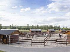 Stallions enjoying retirement. Interesting concept | Röwer & Rüb