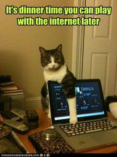 Cats!!!...:)