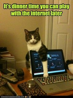Cat wants you to put the internet away and fix dinner.     pinned by www.affordablecomp.net