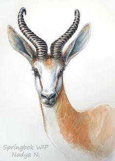 Springbok portrait WIP - watercolour and ink - WetCanvas