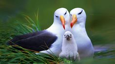 Wallpapers Happy Family Related For Beautiful Birds Hd 1024x576 ...