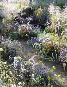 Nice Hampton Court garden by Alexandra Noble