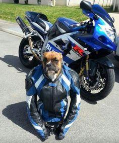 Live to bark