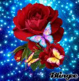 Diy Red Rose Diamond Painting Embroidery Craft Cross Stitch Home Decor Art & Garden Butterfly Wallpaper, Butterfly Flowers, Beautiful Butterflies, Flowers Gif, Exotic Flowers, Beautiful Gif, Beautiful Roses, Beautiful Things, Art Papillon